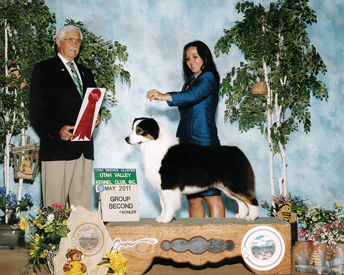 "BISS ASCA/AKC CH Stone Ridge Devils N Angels STDs ""Bliss"""